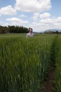 Chest Deep in Barley